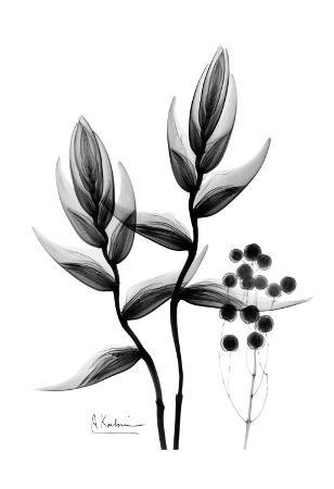 Heliconia Arrangement Black and White
