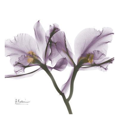 Orchid in Purple