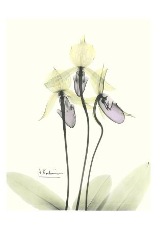 Lovely Orchids II