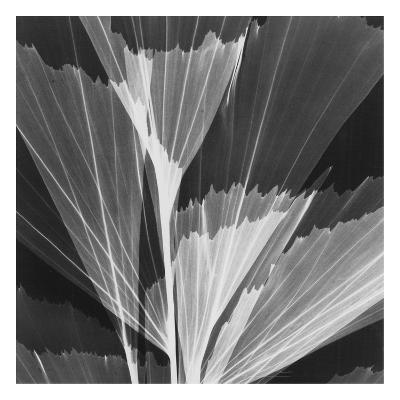 Leaf Arrangement Black on White