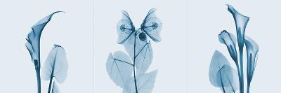 Lilies Triple in Blue