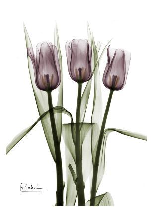 Triplet Tulips in Color