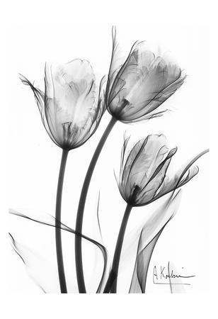 Tulip Arrangement in Black and White
