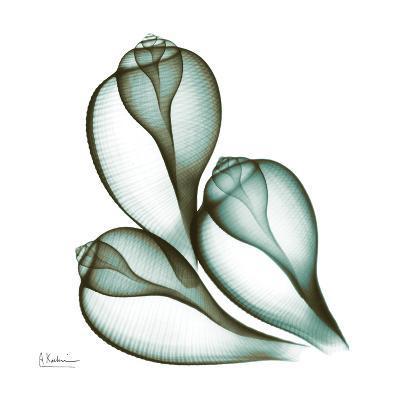 Sea Shells in Green II