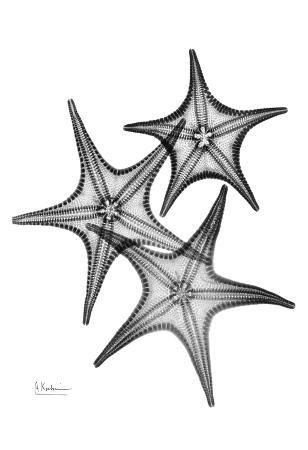 Star Fish Burst Triple