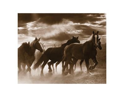 Running Horses and Sunbeams