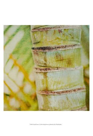Tropical Texture II