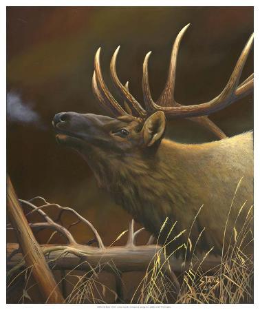 Elk Portrait I