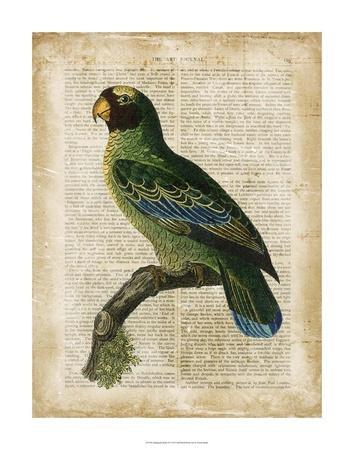 Antiquarian Birds VI