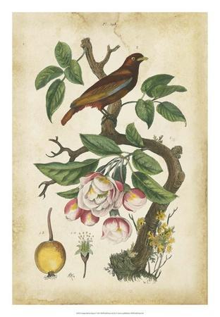 Antique Bird in Nature I