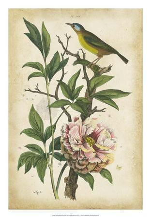 Antique Bird in Nature II