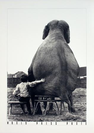 My Pal the Elephant