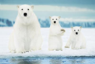 Polar Bears-Family