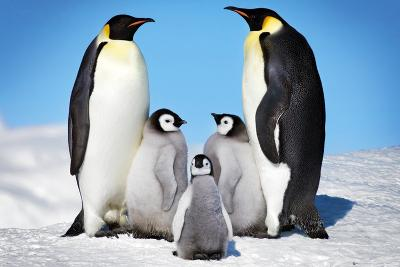 Penguins-Family