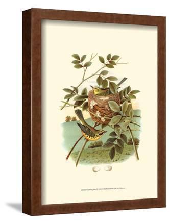 Feathering Nest IV