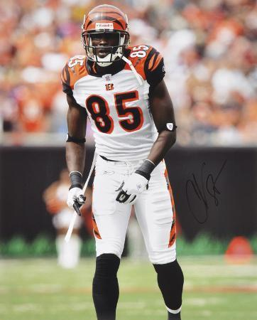 Chad Johnson Cincinnati Bengals -Backward Catch- Autographed Photo (Hand Signed Collectable)