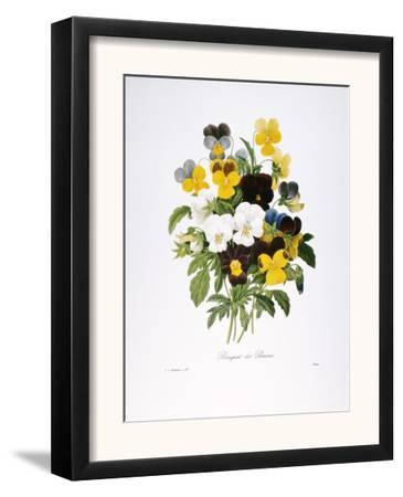 Redoute: Pansy, 1833