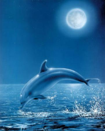 Moon Dolphin Art Print Poster
