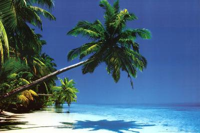 Maldives (Palm Tree Over Beach) Art Poster Print