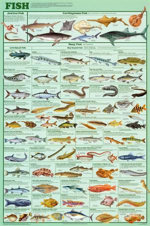 Fish Educational Science Educational Science Chart Poster