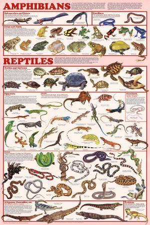 Amphibians and Reptiles Educational Science Chart Poster