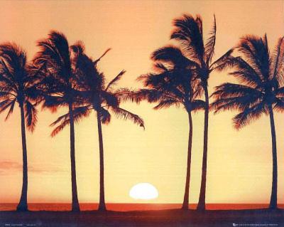 Sunset (6 Palm Trees) Art Poster Print