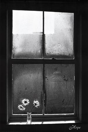 Hope (Window with Flowers)