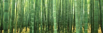 Japan (Bamboo Forest)