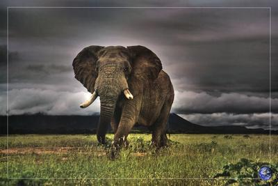 African Majesty, Save Our Planet (Elephant) Art Poster Print