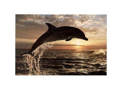 Bottlenose Dolphin at Sunset