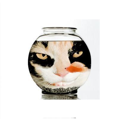 Evil Cat Goldfish Bowl