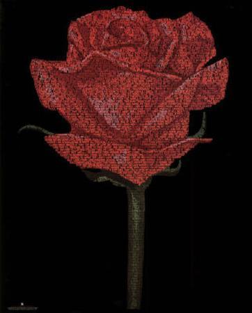 Red Rose (William Shakespeare Romeo & Juliet Script) Art Poster Print