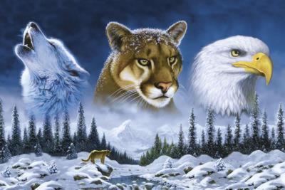 American Wildlife (Wolf, Cougar, Bald Eagle) Art Poster Print