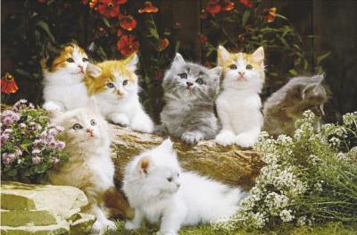 Baby Cats (Kittens Photo) Art Poster Print