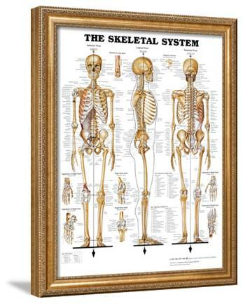 The Skeletal System Anatomical Chart Poster Print Prints At