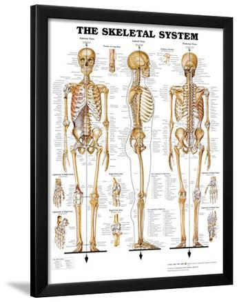 The Skeletal System Anatomical Chart Poster Print Prints at ...