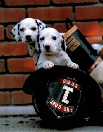 Ron Kimball Firefighting Pups Art Print Poster