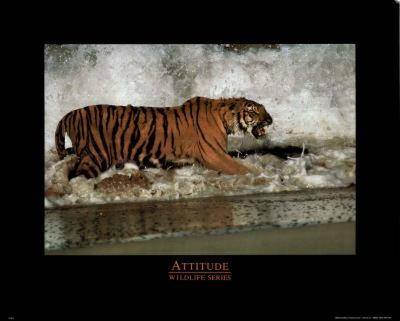 Animal Tiger Attitude Motivational Art Print POSTER