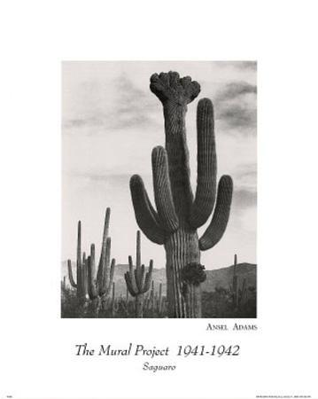 Ansel Adams (Saguaro Cactus) Art Print Poster