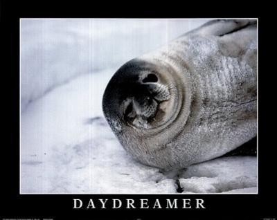 B. Todd (Daydreamer, Seal) Art Poster Print