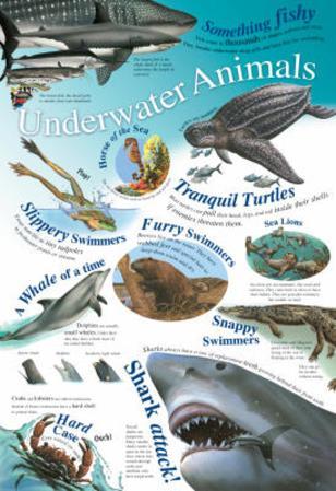 Laminated Underwater Animals Educational Chart Poster Print