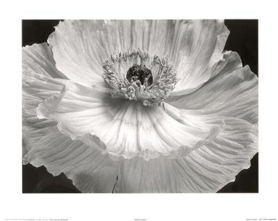 Poppy Flower (B&W Close-Up) Art Poster Print