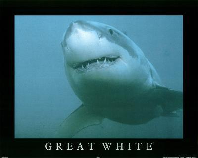 Great White Shark in Ocean Close Up Art Print POSTER