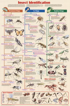 Insect Identification Educational Science Chart Poster