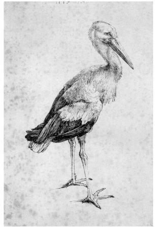 Albrecht Durer (Storch) Art Poster Print