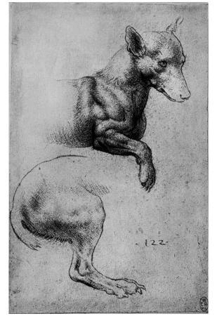 Leonardo da Vinci (Study sheet, dog) Art Poster Print