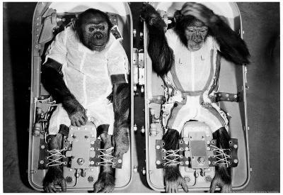 Space Monkeys 1962 Archival Photo Poster