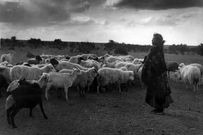 Woman Goat Herder Archival Photo Poster Print