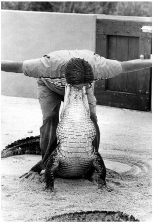 Alligator Wrestler Archival Photo Poster