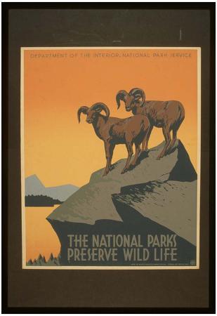 National Park Service (The National Parks Preserve Wild Life) Art Poster Print